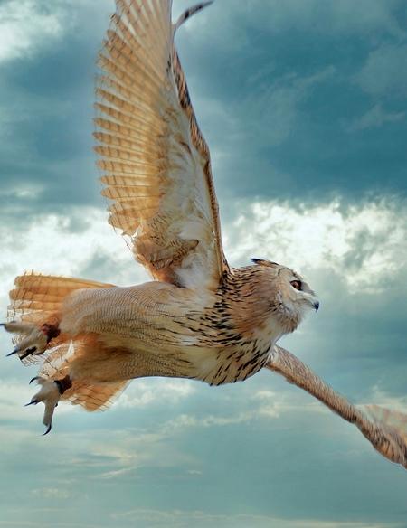 Volle Vlucht - De Uil in volle vlucht - foto door job55 op 08-04-2021 - locatie: Kerkrade, Nederland - deze foto bevat: uil, vlucht, natuur, wolk, lucht, vogel, bek, veer, accipitridae, falconiformes, vleugel, water, staart