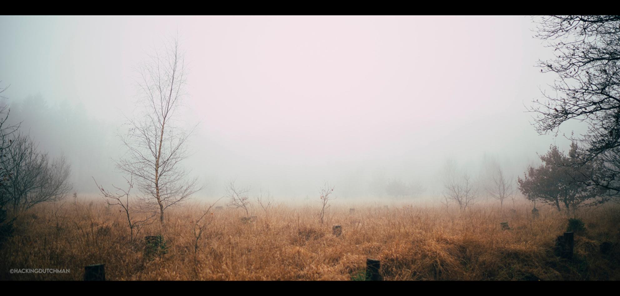 Mistig - Mist in het bos.    ©MotionMan 2020 - foto door motionman op 11-12-2020 - deze foto bevat: gras, wit, boom, herfst, morgen, winter, landschap, mist, bos, mistig, bomen, horror, perspectief, dood, film, compositie, sfeer, emotie, grijs, veld, eng, kaal, vocht, sfeervol, wijd, mistige, scene, oranjewoud, verderf, vochtig, cinematisch, scenisch - Deze foto mag gebruikt worden in een Zoom.nl publicatie