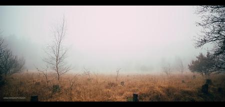 Mistig - Mist in het bos.    ©MotionMan 2020 - foto door motionman op 11-12-2020 - deze foto bevat: gras, wit, boom, herfst, morgen, winter, landschap, mist, bos, mistig, bomen, horror, perspectief, dood, film, compositie, sfeer, emotie, grijs, veld, eng, kaal, vocht, sfeervol, wijd, mistige, scene, oranjewoud, verderf, vochtig, cinematisch, scenisch