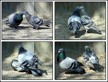 O die duifjes toch!