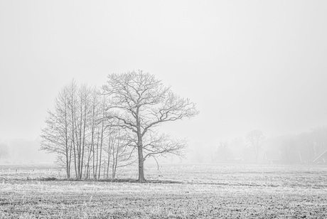 Bevroren landschap