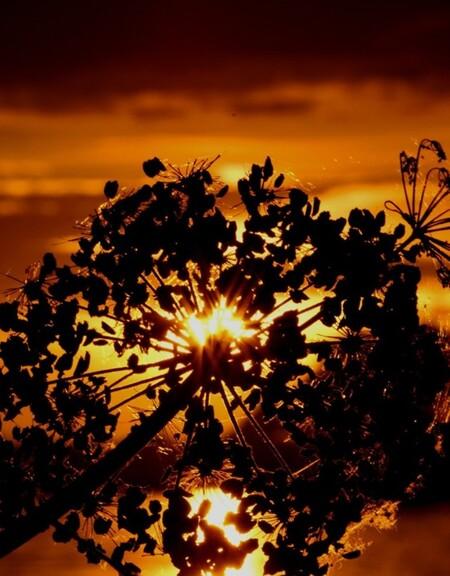prachtig licht - Zonsondergang bekeken door een andere compositie!! - foto door Jan_koppelaar op 18-07-2007 - deze foto bevat: macro, zon, bloem, licht, zonsondergang, sfeer