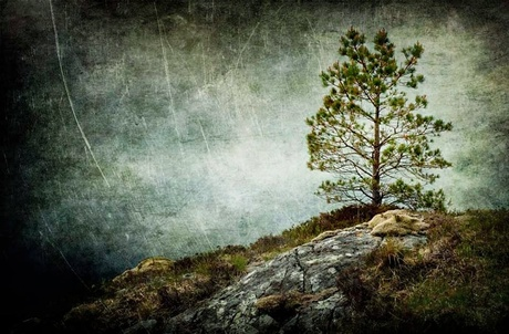 Another Lonely Tree