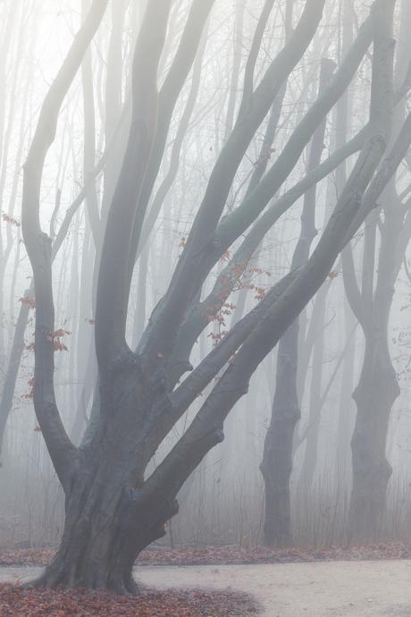 Boom in mist