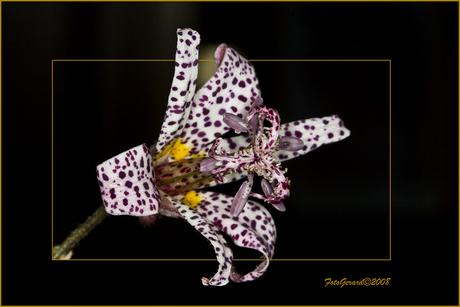 Orchideeën pareltjes