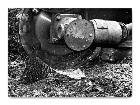 Weg stronk............ - Langs de dijk achter mijn huis hebben weer verschillende bomen er aan moeten geloven. Nu hoorde ik een hoop herrie en ben snel gaan kijken.  Wat ble - foto door wilhelmien op 10-01-2012 - deze foto bevat: natuur, werk, technisch, landschapsonderhoud