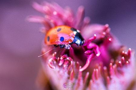 Lieveheersbeestje - - - foto door samantharorijs op 26-02-2021 - deze foto bevat: kleur, macro, bloem, natuur, lieveheersbeestje, dieren, insecten, insect, wildlife