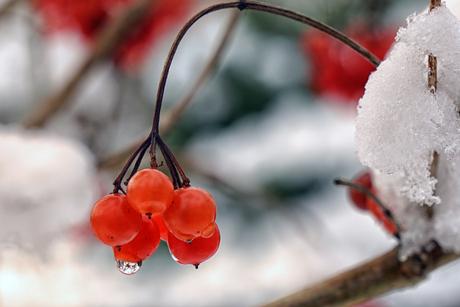 Winterbessen