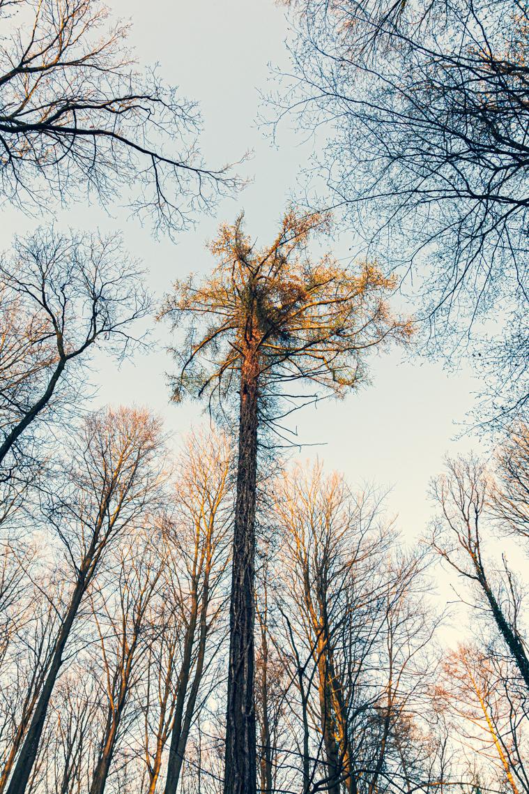 Bomen - Hallerbos - foto door skyart op 10-04-2021 - locatie: Halle, België - deze foto bevat: lucht, natuurlijk landschap, takje, kofferbak, wolk, hout, bladverliezend, landschap, boom, tinten en schakeringen