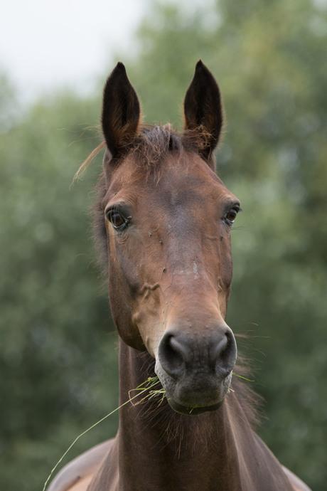 (Paarden)Portretje