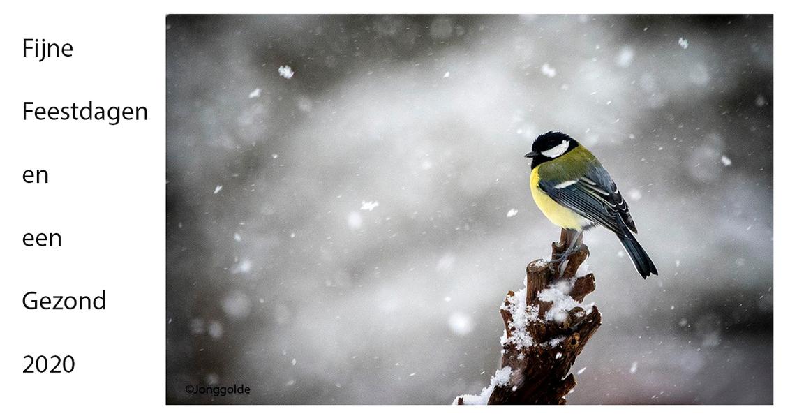 21 december 2019 - - - foto door jonggolde_zoom op 21-12-2019 - deze foto bevat: vogels, sneeuw, nieuwjaar, winter, koolmees, kou, kerstwens, tuinvogels, jonggolde