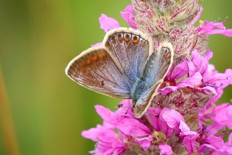 Vrij zijn als een vlinder