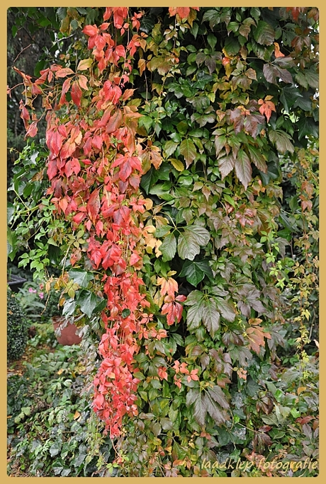 Herfst kleuren