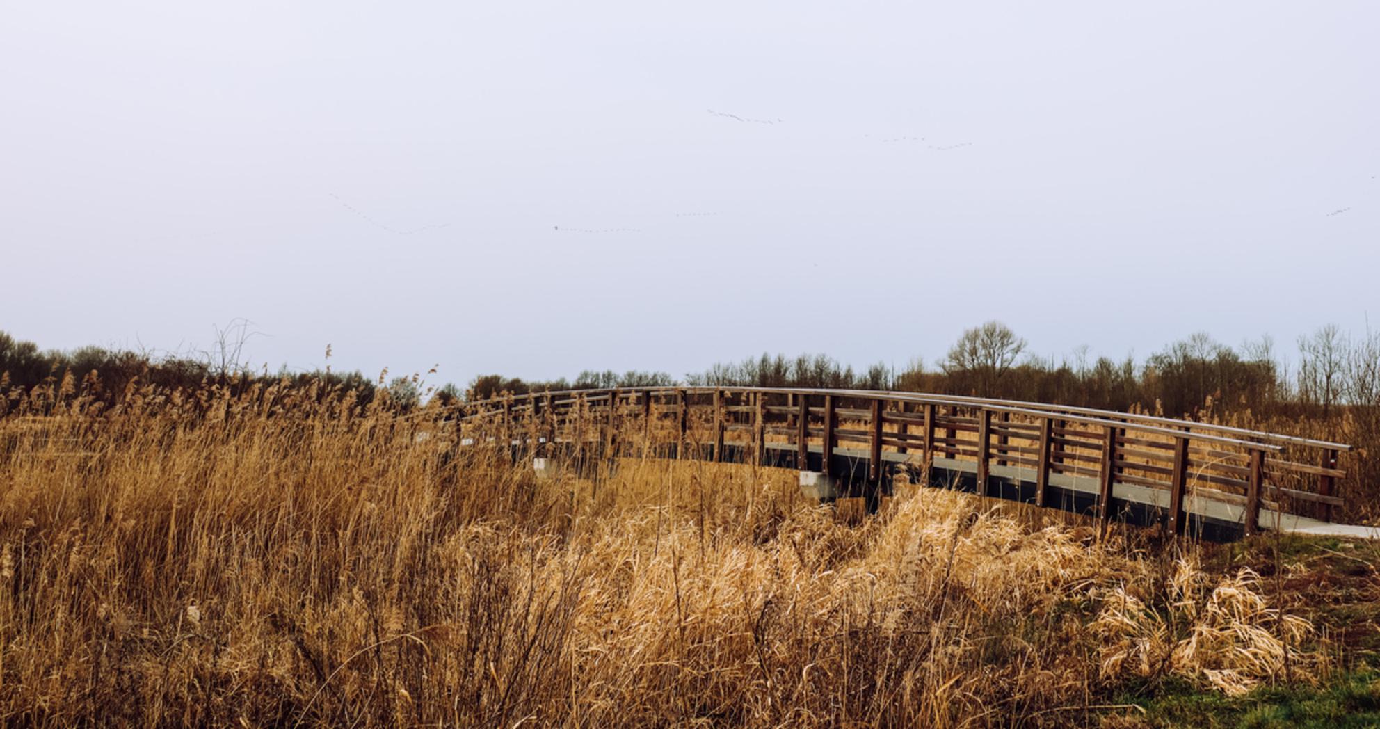 Kromslootpark - - - foto door Tiram op 28-02-2021 - Deze foto mag gebruikt worden in een Zoom.nl publicatie