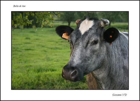 Ik koe van joe :)