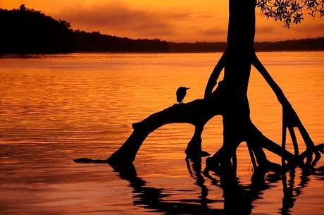 zonsopgang boven de Suriname rivier