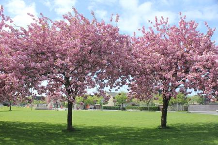 bloesem - bloesem - foto door Robertus_zoom op 16-04-2021 - locatie: Zoetermeer, Nederland - deze foto bevat: lucht, fabriek, wolk, bloem, natuur, afdeling, boom, natuurlijk landschap, bloemblaadje, gras