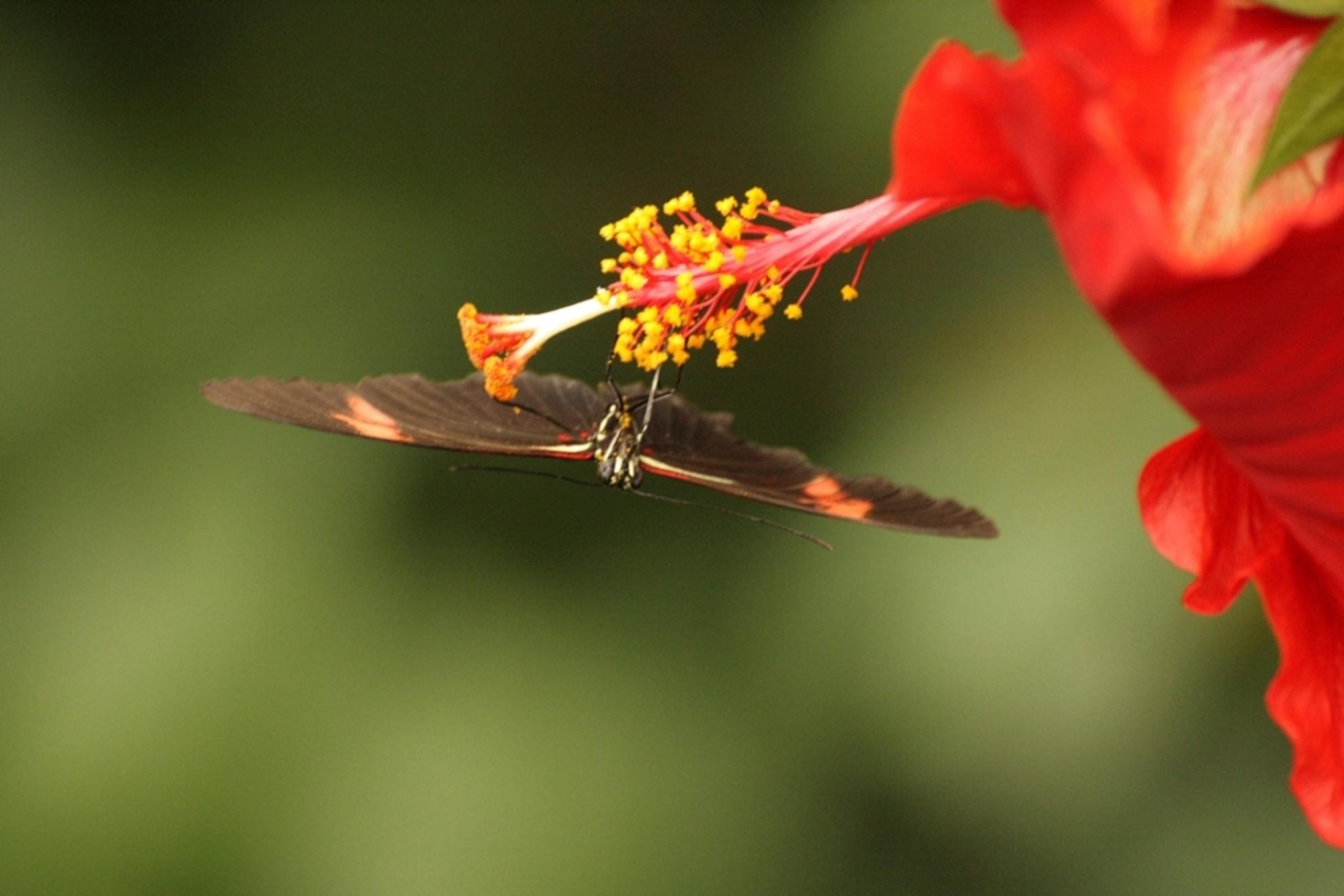 Upside down - Vlinder....... - foto door benbaremans op 29-01-2012 - deze foto bevat: vlinder, dieren