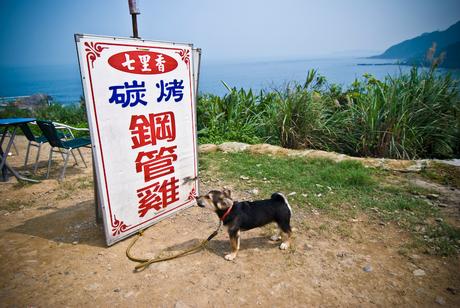 Taiwan Dog
