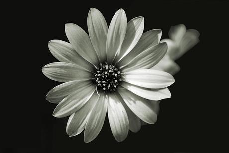 Bloem zwart-wit