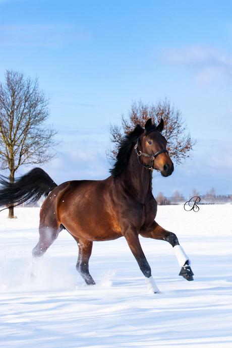 Paard genietend in de sneeuw