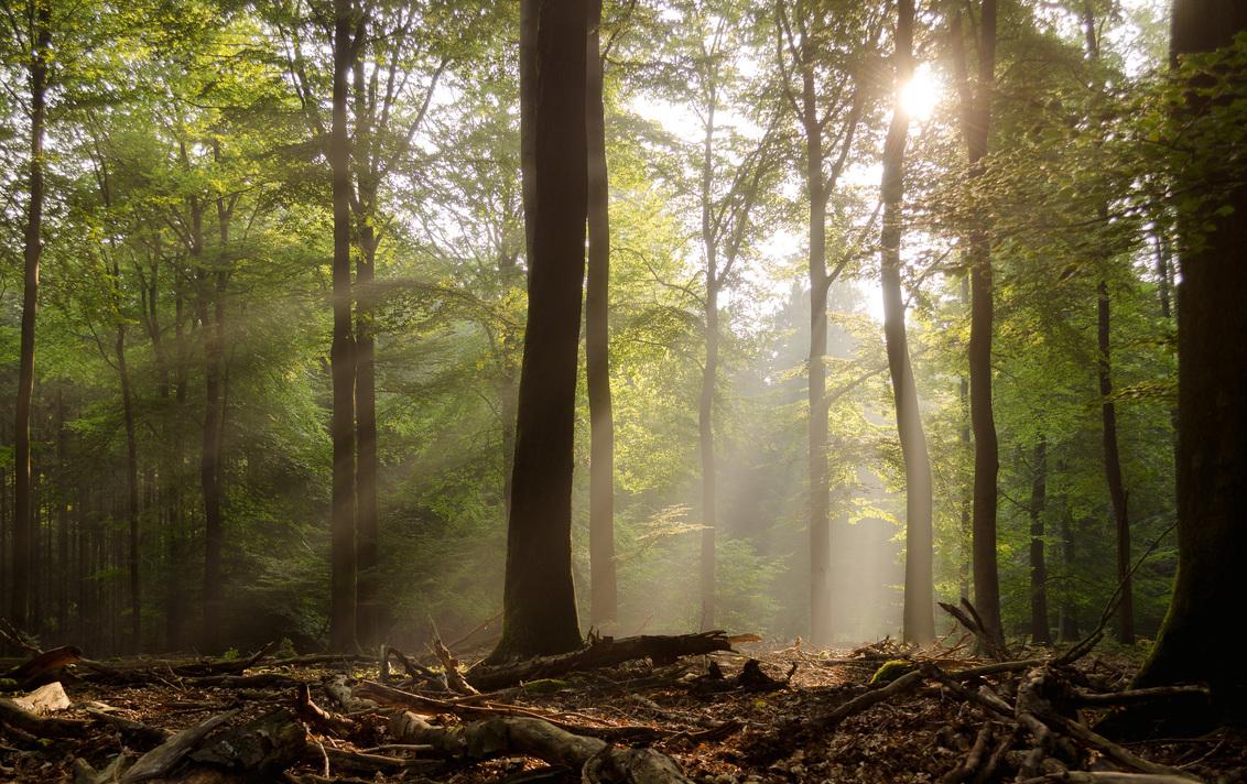 Zon in het Speulderbos - s'Ochtends in het Speulderbos kwam de zon mooi door de bladeren - foto door nicosinselmeijer op 22-11-2017 - deze foto bevat: zon, licht, zonsondergang, landschap, mist, bos, zonsopkomst, bomen, speulderbos, speuld