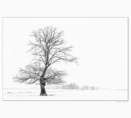 Winterprikje...