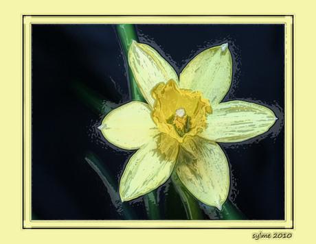 Narcis bewerkt