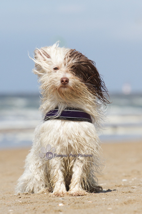 Toby 'beach look'