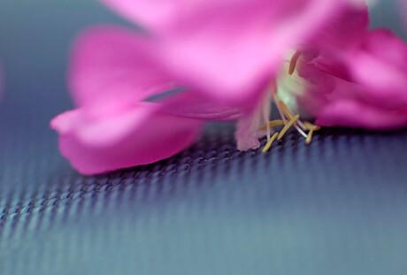 Gevallen bloempje