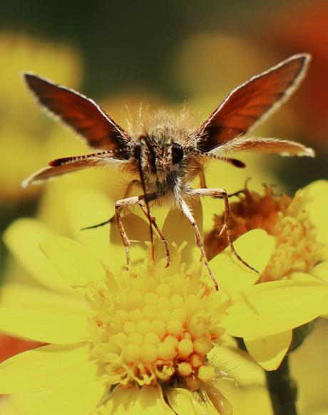 Vlindermonstertje