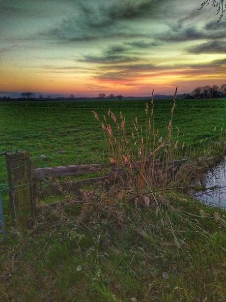 Hekje bij zonsondergang