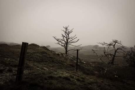 Mistige duinen