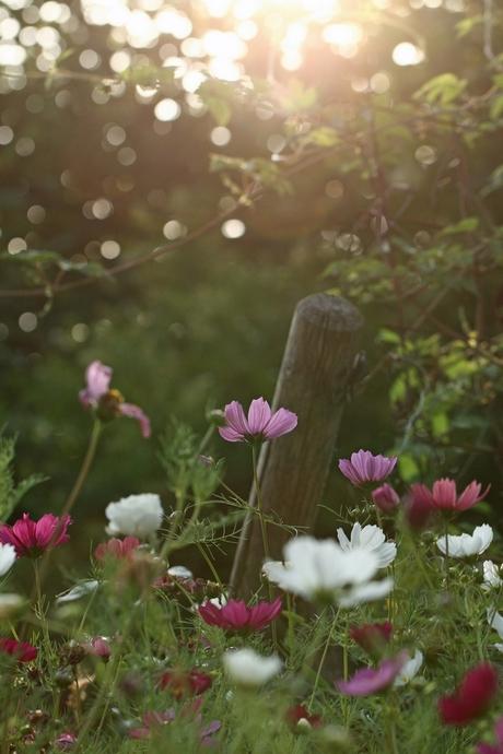 Bloemen in avond zon