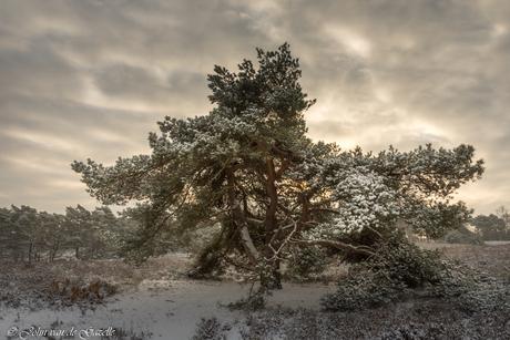 Winter in de Brunssummerheide