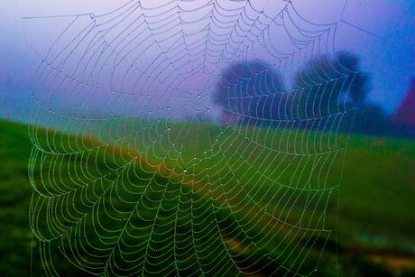 Spinny Spider Web