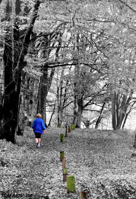 jogger in blue - Per ongeluk de vorige gewist.... Nu dan zonder blauw rand..is inderdaad mooier - foto door truitje2003 op 13-11-2008 - deze foto bevat: herfst, bos, jogger