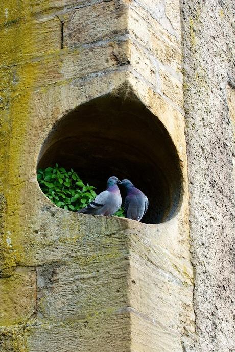 Romantiek in een brugpijler