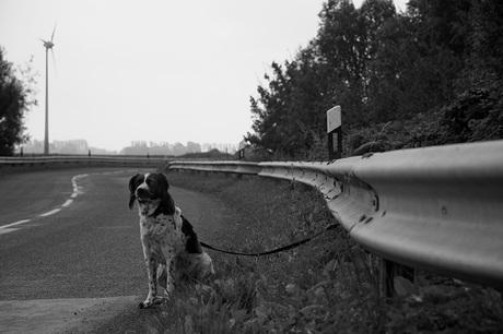 Hond langs de weg