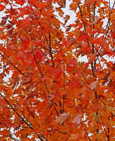 Autumn leaves part t(h)ree
