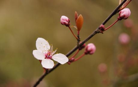 Eerste bloemen