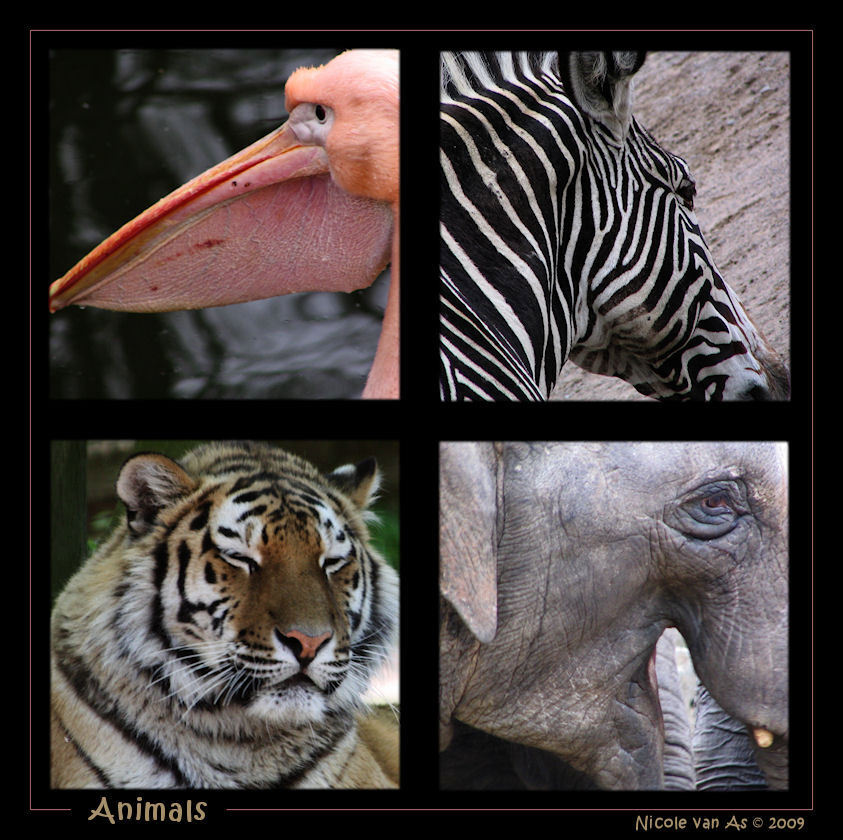 Animals - Variatie aan dieren.  Zo veel soorten zo veel verschillen. - foto door nicole-8 op 19-02-2009 - deze foto bevat: zebra, dierentuin, dieren, olifant, pelikaan, canon, collage, tijger, bewerking, dierenpark
