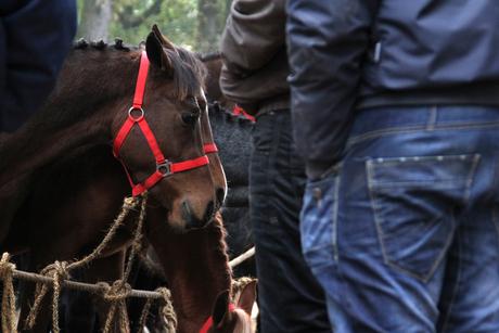 Handelaren bekijken paarden