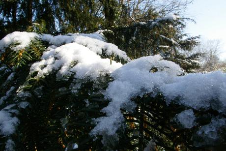sneeuw 1,2