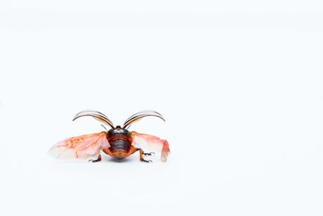 coloradokever