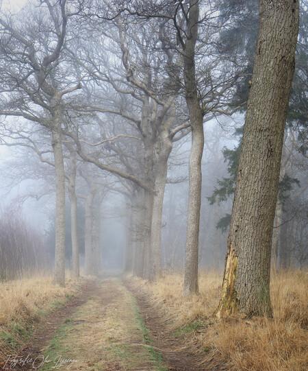 bospad - - - foto door olav_zoom op 28-02-2021 - deze foto bevat: natuur, licht, winter, landschap, mist, bos, bomen