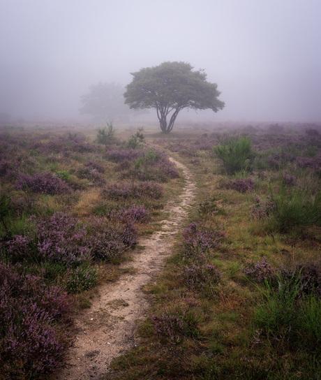 Mistige Heide