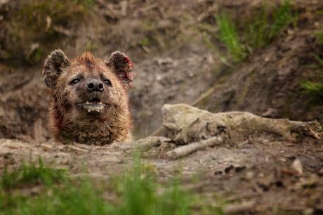 Hyenagevecht 5