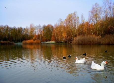 winterse herfst