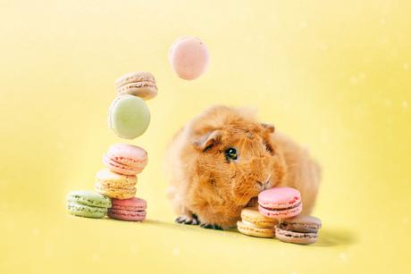 Pien Macarons
